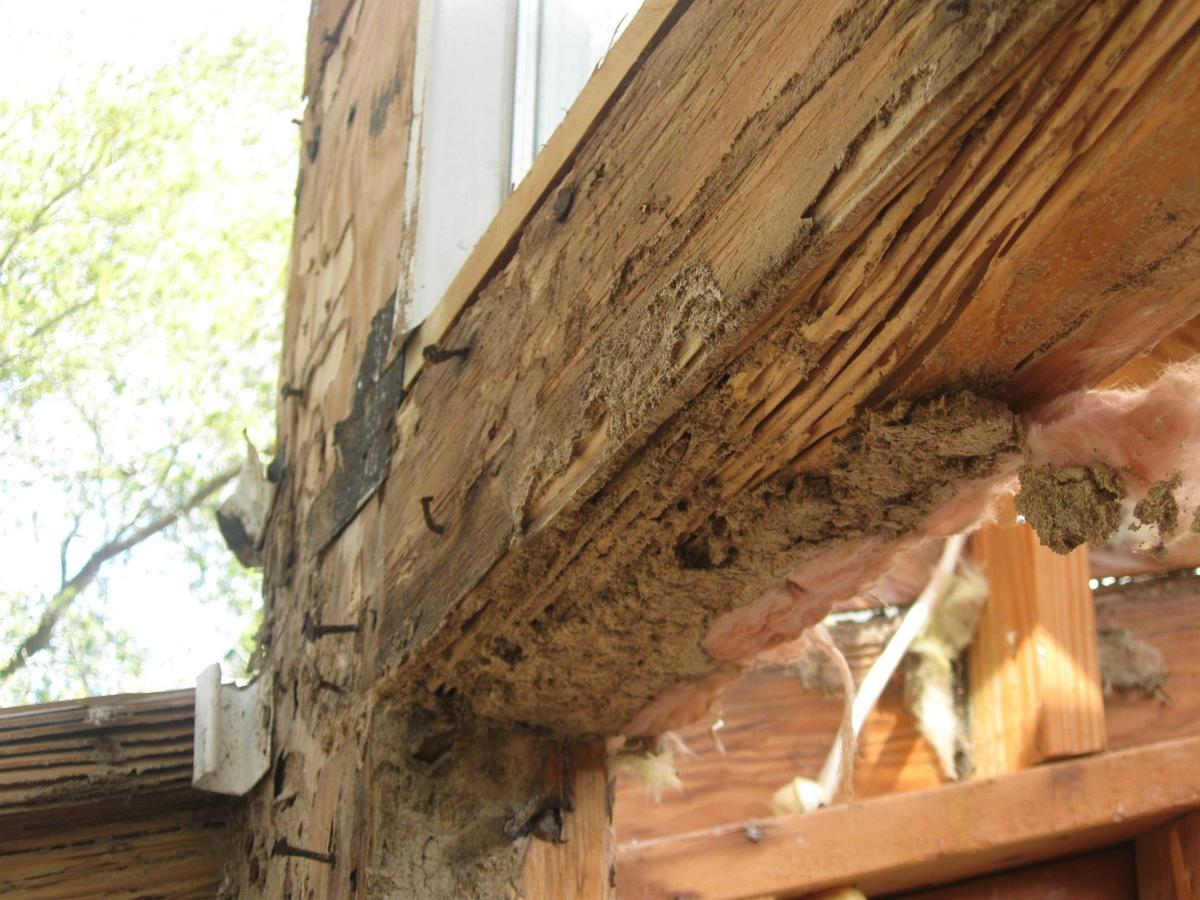 A big little problem Don\'t ignore the Formosan termite threat to ...