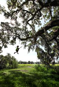 A walk in the Lowcountry woods to discern the meaning of trees
