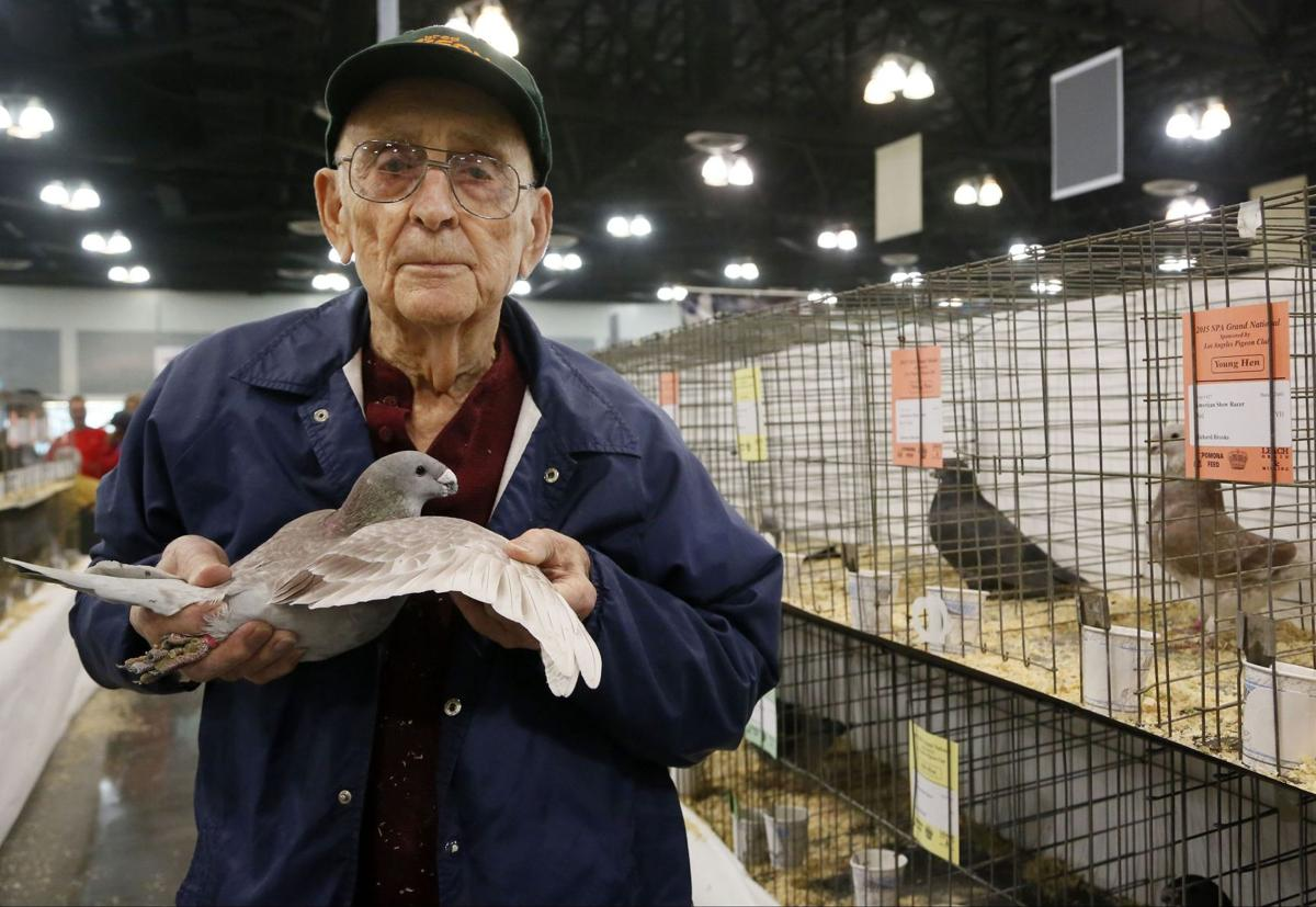 Pigeon pageant showcases beautiful birds