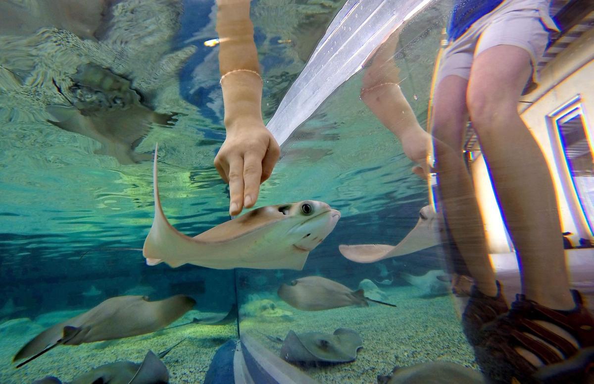 Shark Shallows exhibit