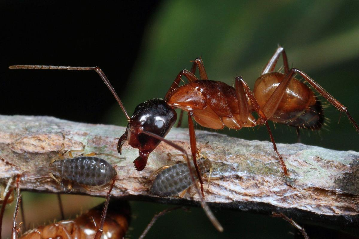 zombie ants crawl across lowcountry archives postandcourier com