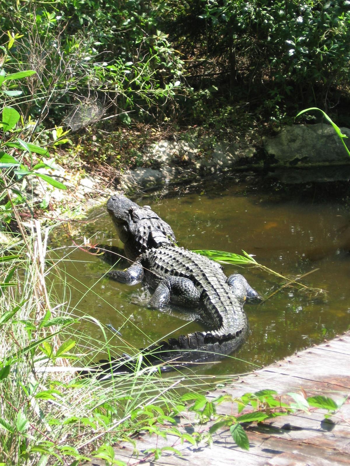 South Carolina parks to rebuild destroyed nature center