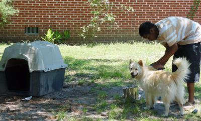 'Unchain Charleston' gets dogs off tethers (copy)