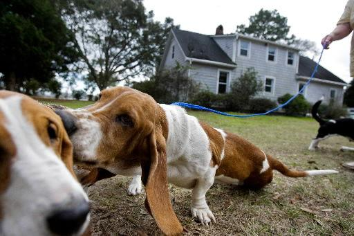 Night In Charleston I Met Katrina Dog >> Real Estate Transactions Home And Garden Postandcourier Com