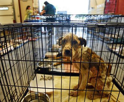 Shelter adopts out 102 pets