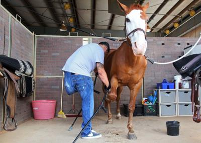 Equine therapy helps veterans cope