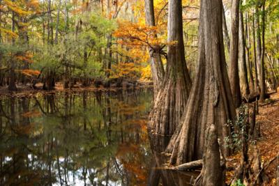 Congaree National Park and Friends of Congaree Swamp will co-host Smithsonian Water/Ways exhibition