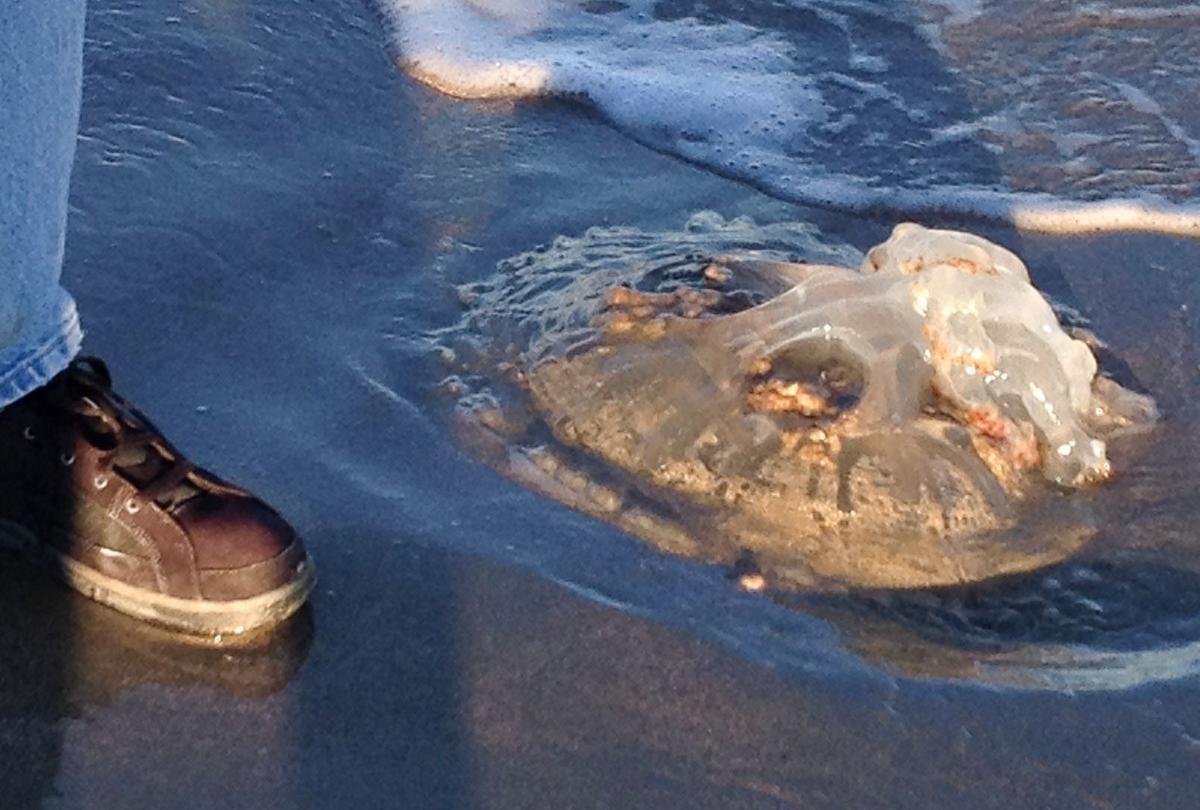 What's that blob on beach?