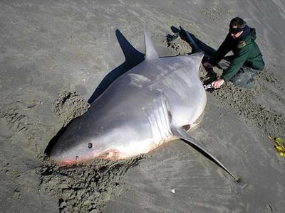 Dead on beach: Jaws