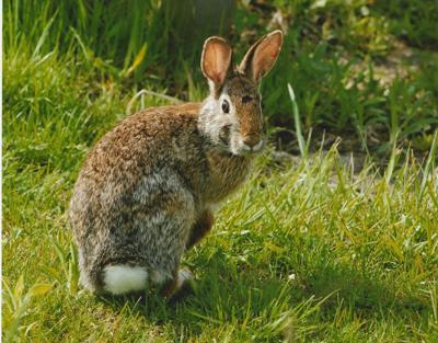 bunny (copy)