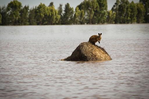 Australia floods larger than France strand 200,000