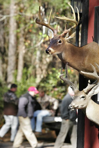 Vanishing act by deer leaves lots of hunters puzzled