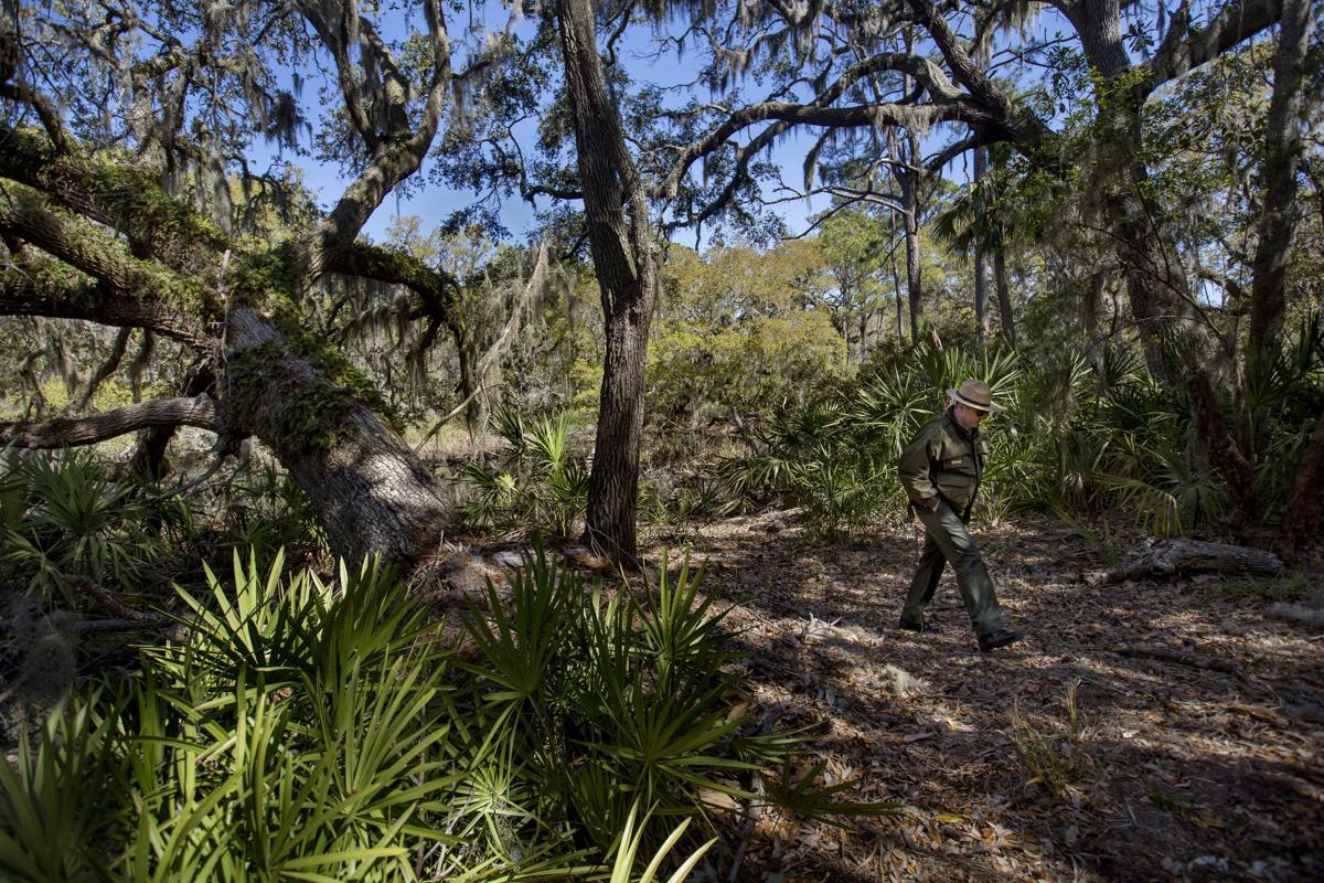 PRINT LEDE lede live oak ranger.jpg