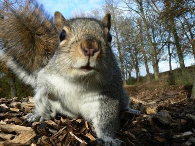 Squirrel (copy)