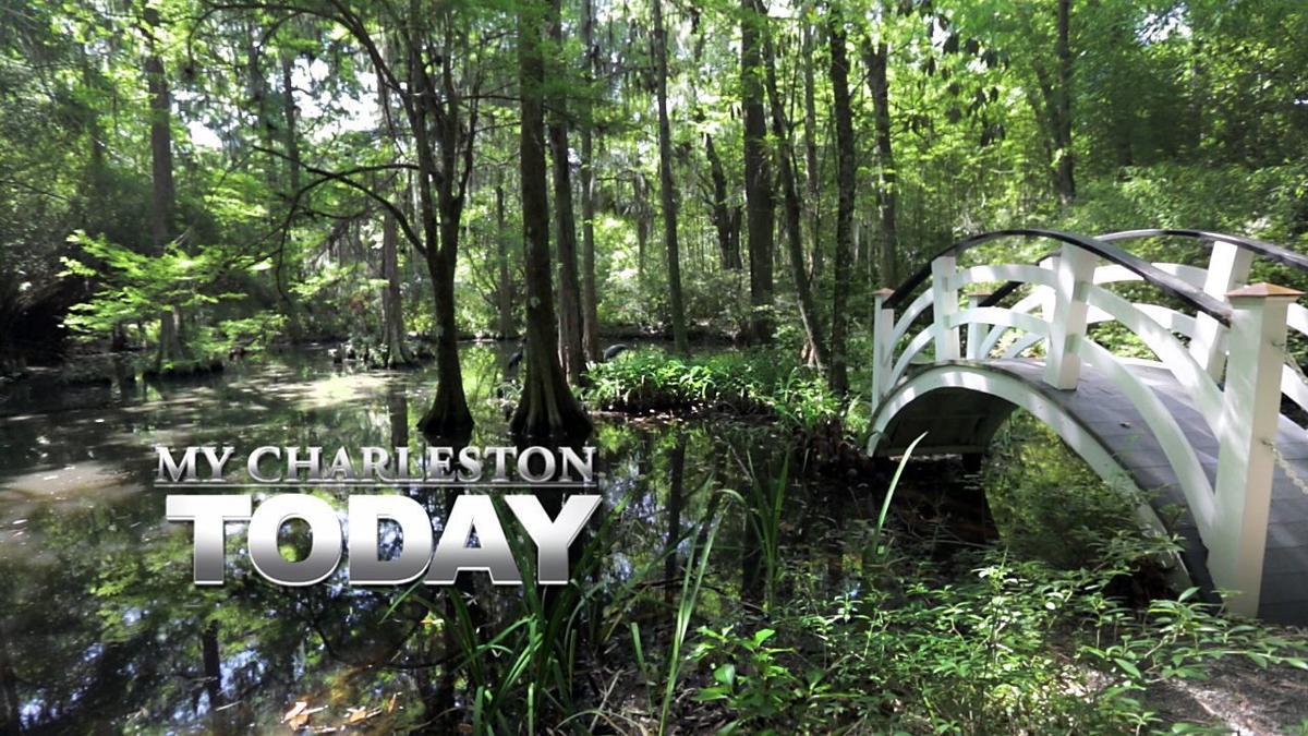 My Charleston Today: Magnolia Gardens, one of America's most beautiful gardens