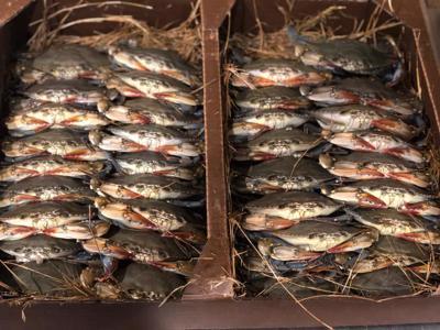 Soft shell crabs (copy)