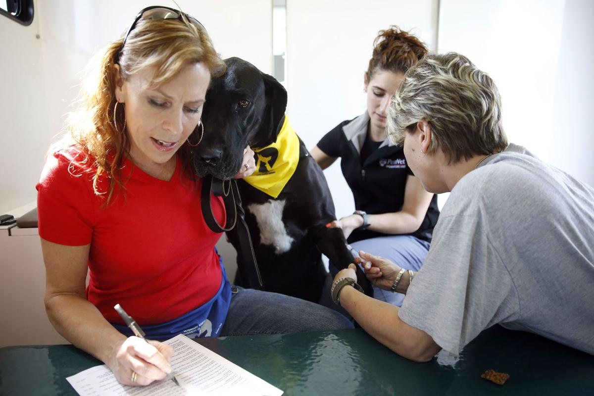 Dog's best friend? Blood donors