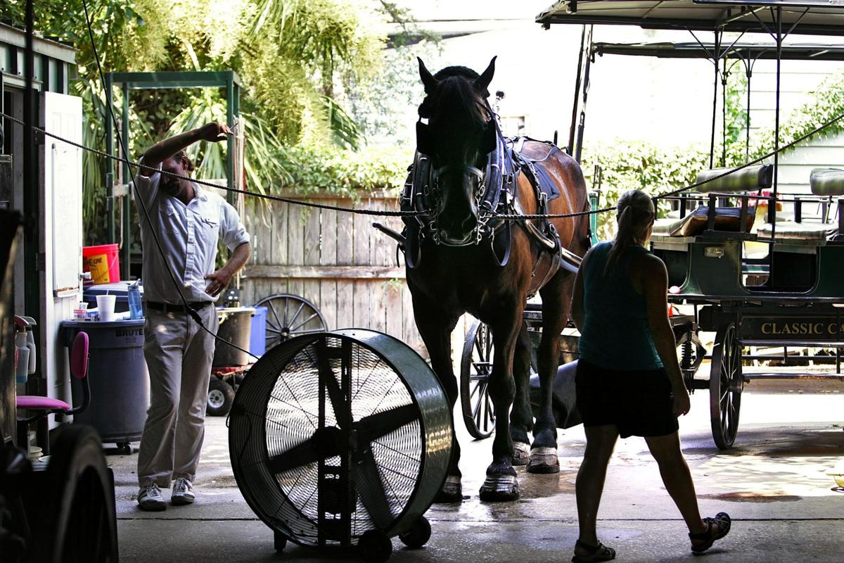 Carriage horses near limit for heat