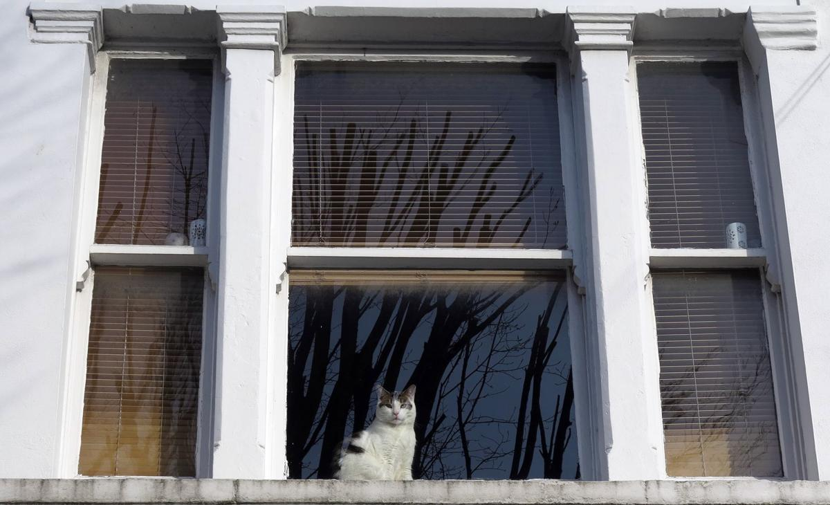 London zoo to create map of city's cats