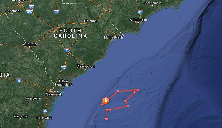 Great white sharks migrating south stop in South Carolina