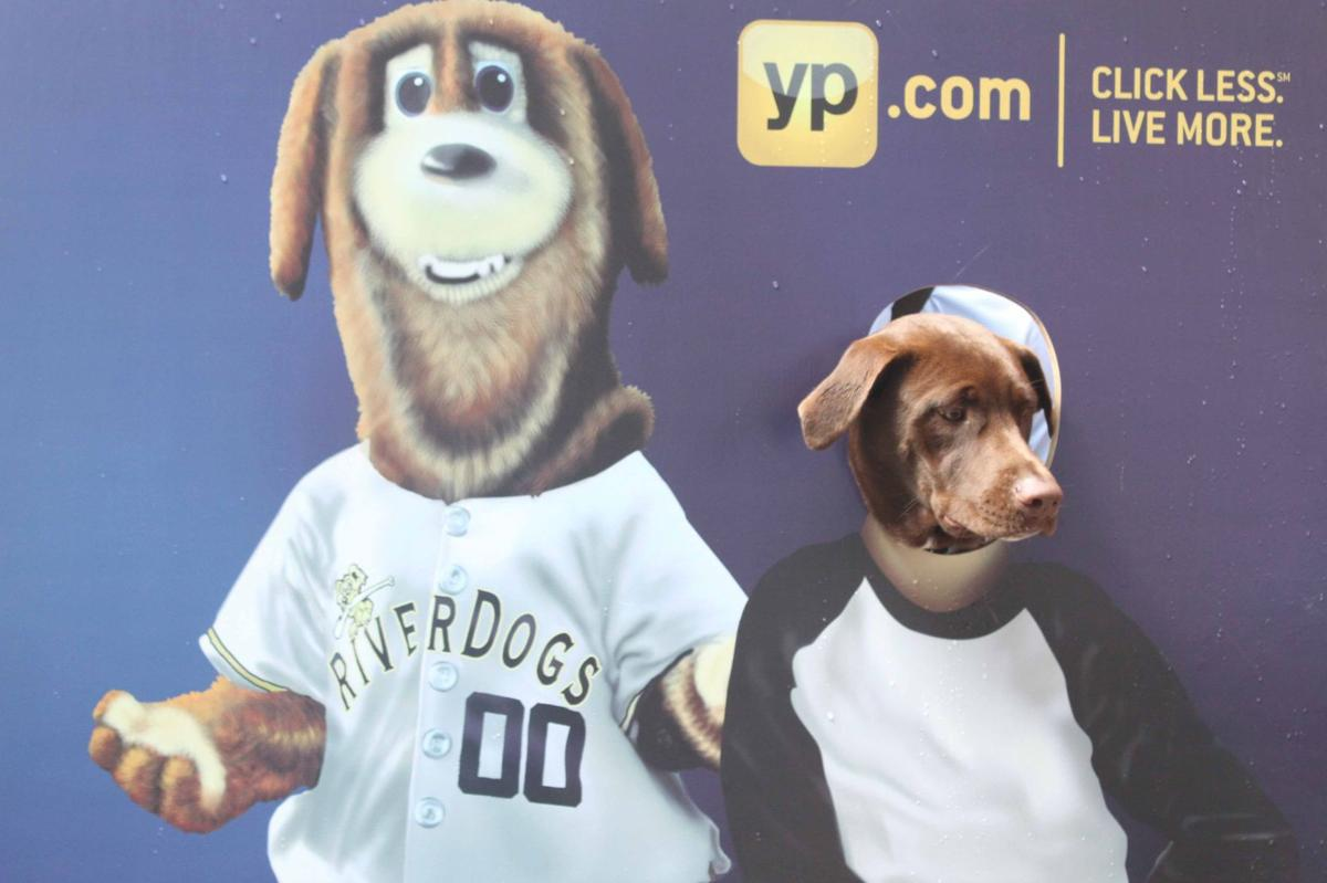 Bring your dog and drink some beer at RiverDogs' annual Bark for Your Brew