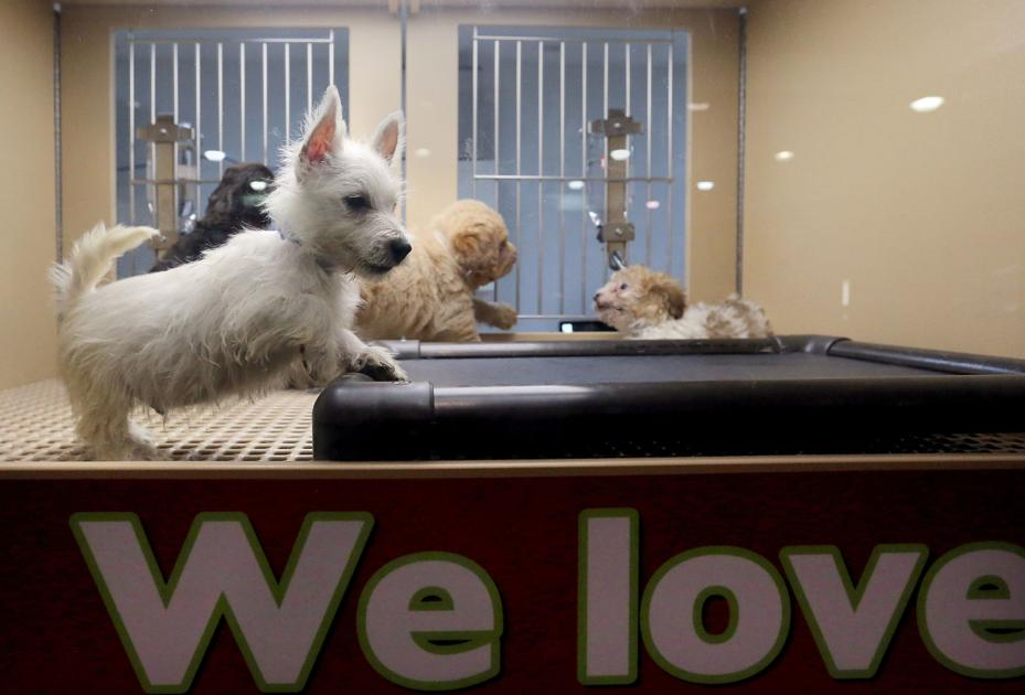 11 SC animal groups protest Summerville pet store's move to