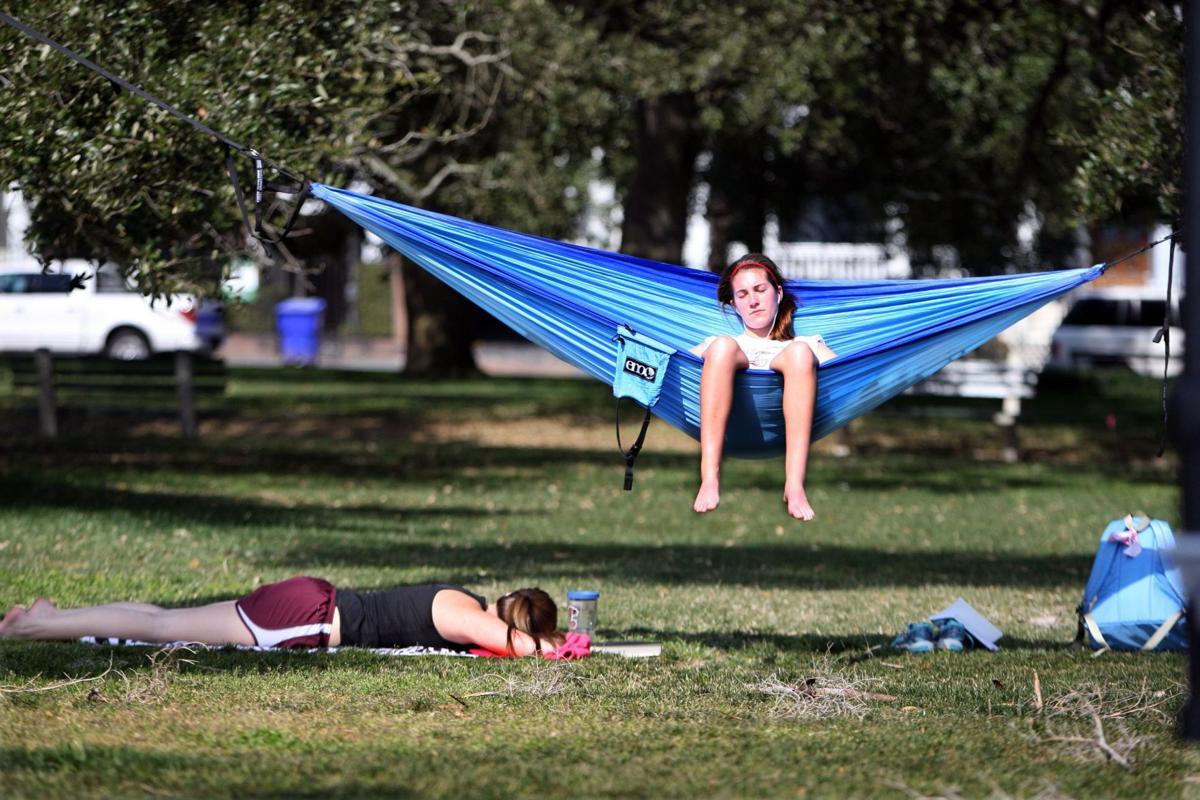 Healthy trees worth hammock ban