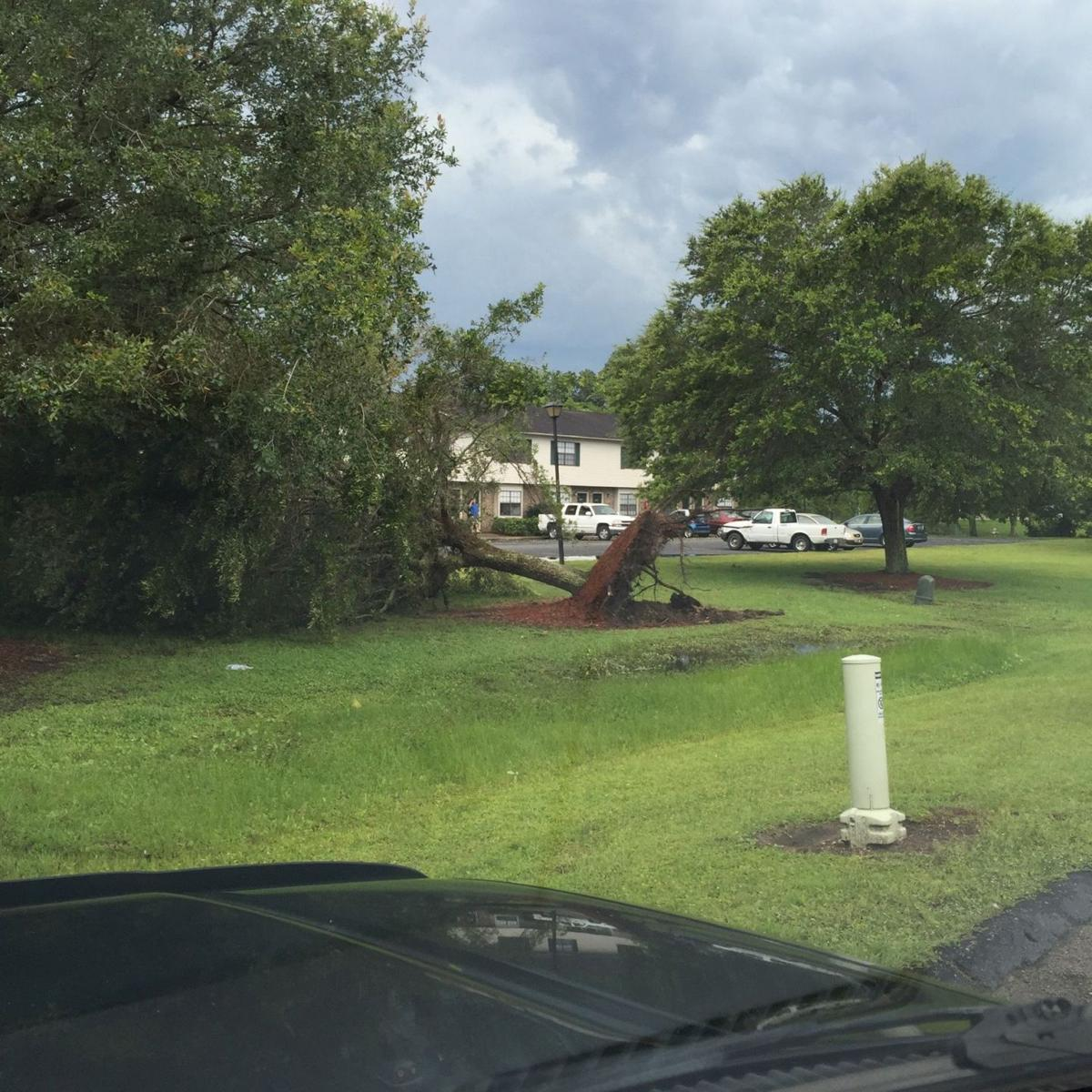 Thousands without power in West Ashley after strong winds knock down trees