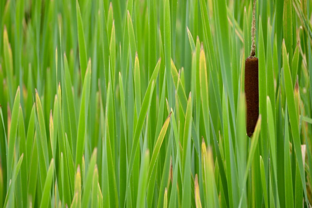 Sarah-Bodkin Green.jpeg