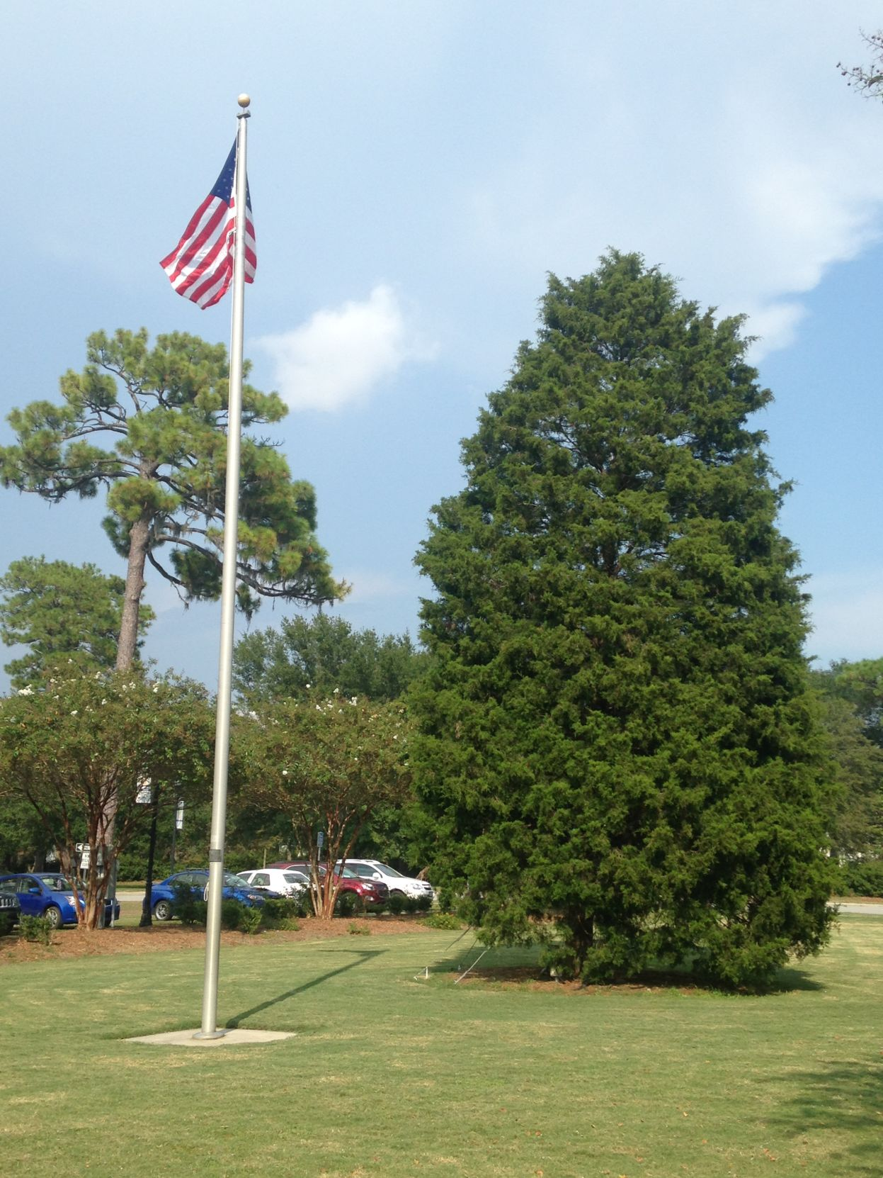 North Charleston's Christmas tree will be removed after damage ...