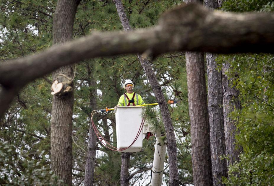 SCE&G angered Charleston residents and cut their trees. Now the state of SC is involved.