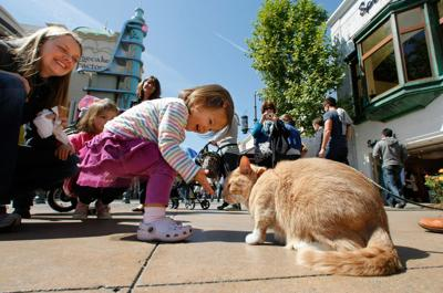 Hollywood tough town for cat