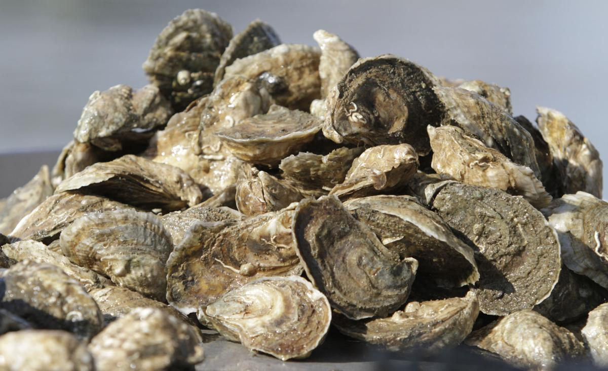 Aquarium hosts its first Oyster Fest