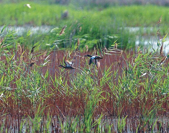 Protecting wetlands is worth red tape