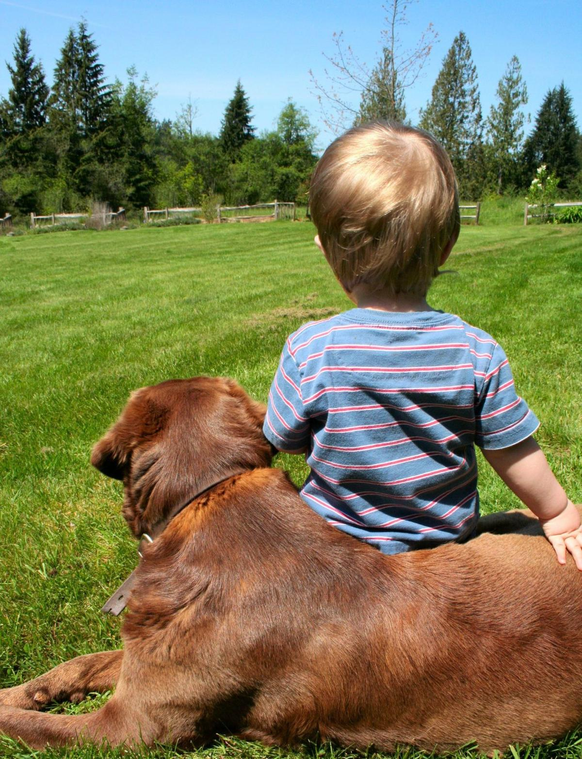 Help your dog, baby live in harmonyPreparation key to dog-child safety