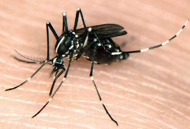 Rise in West Nile locally