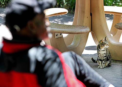 Feral cats back at homeless shelter