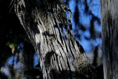 dead tree.jpg (copy)
