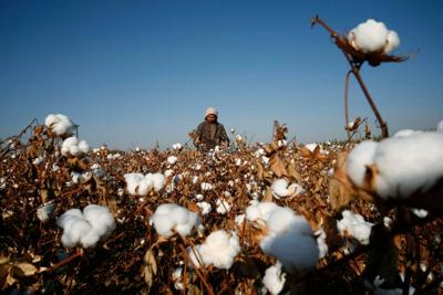 After cotton crackdown, retailers told to target China forced labor