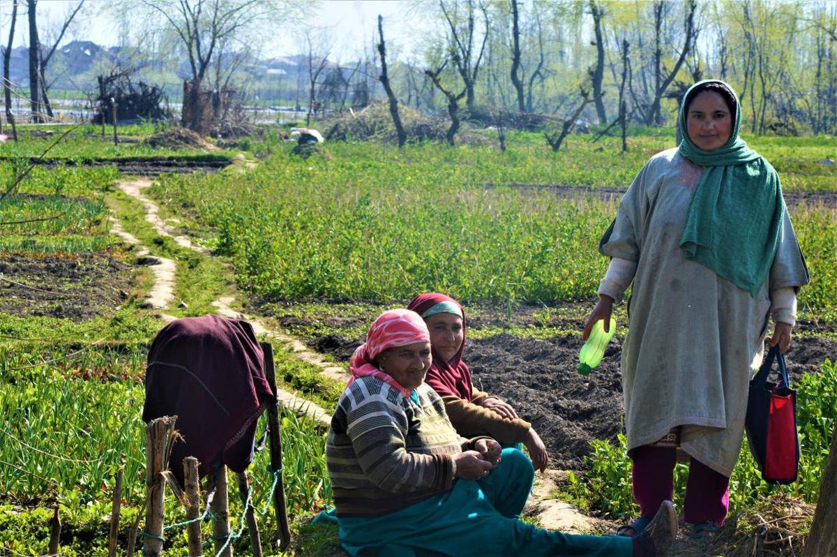 Kashmir turns to vegetables to keep fed in crisis