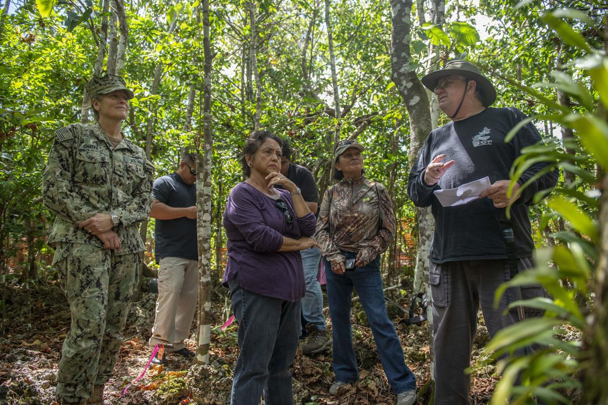 Governor calls for construction pause – around rare tree