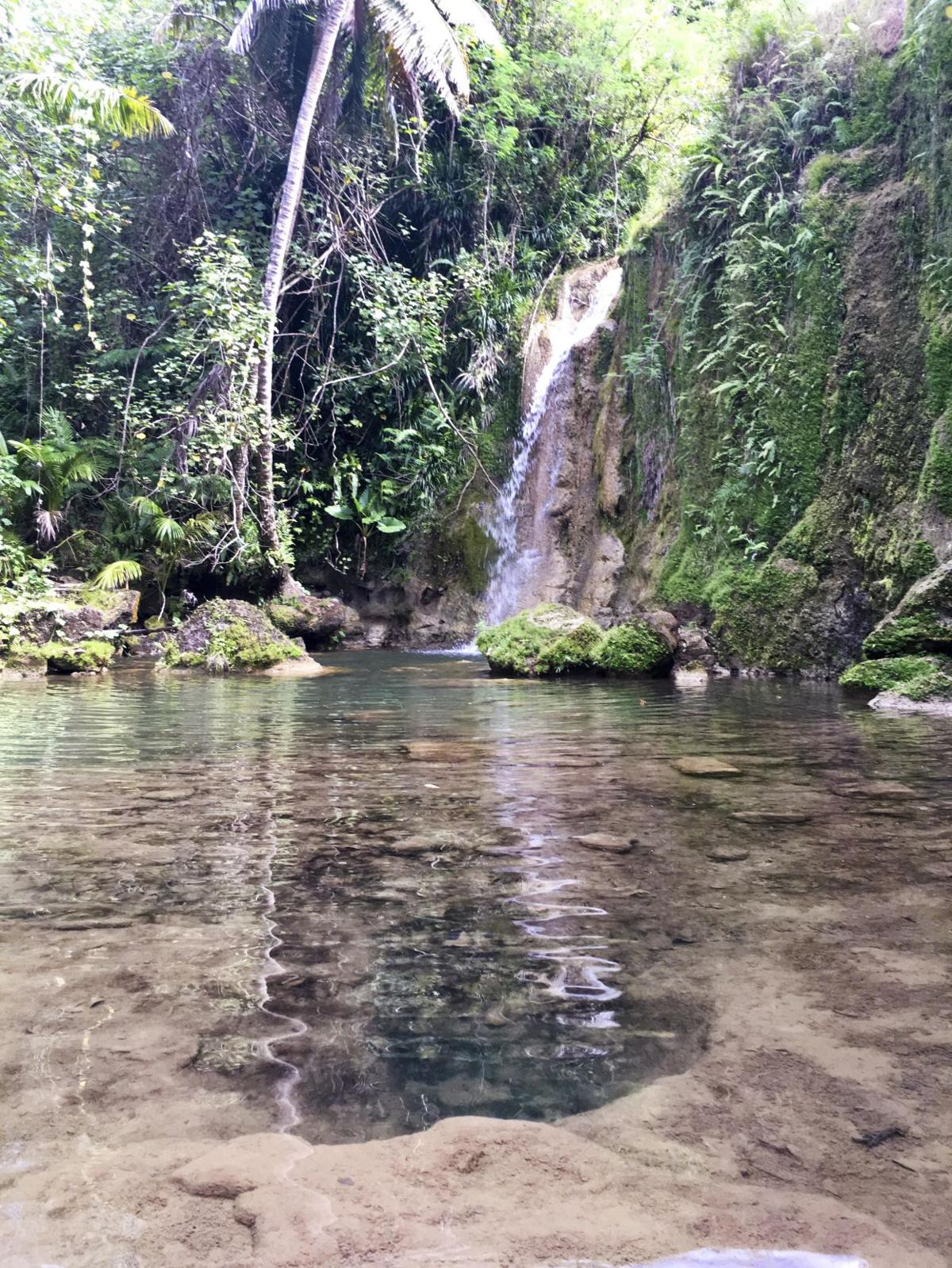 Hidden gems of the jungle