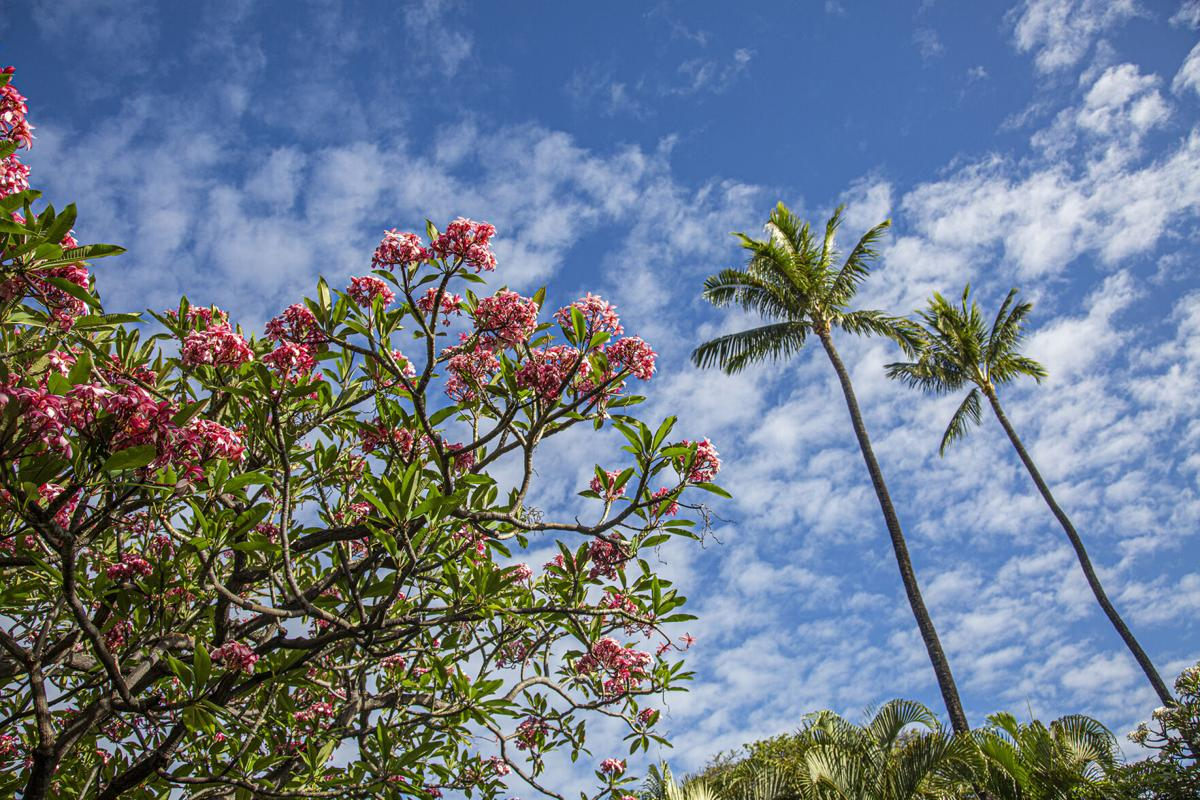 How to be a better tourist in Hawaii, according to locals 1