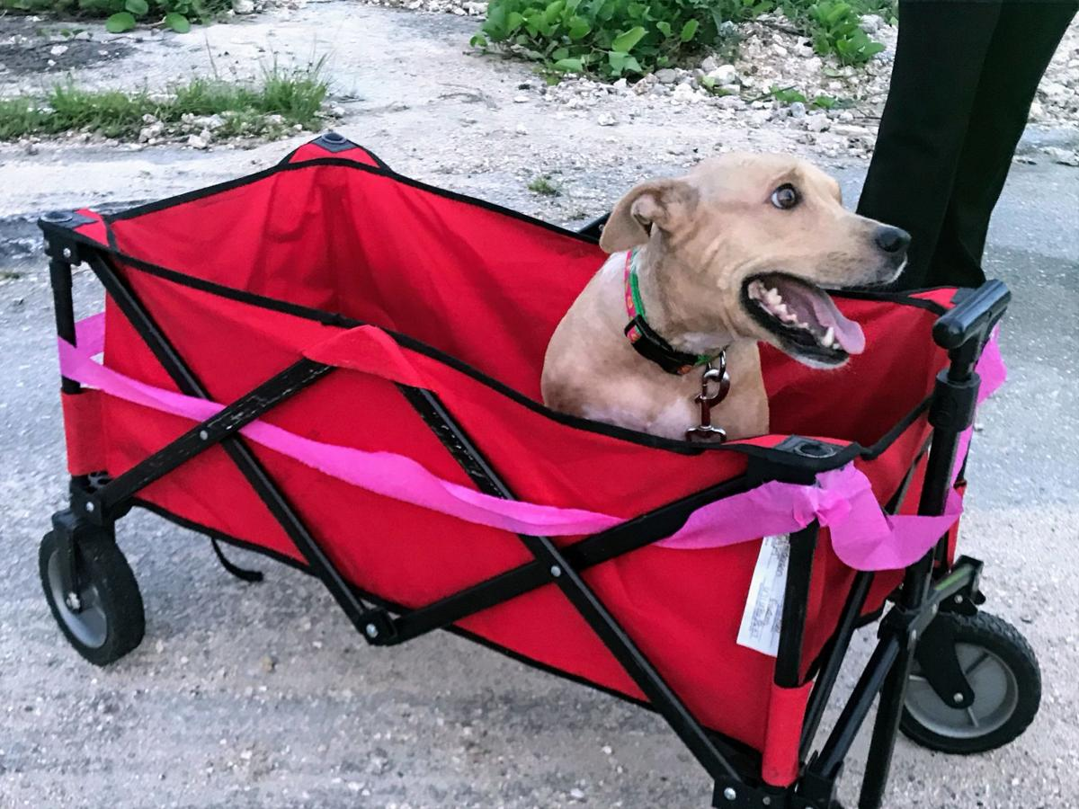Paralyzed 'miracle' dog gets happy ending 2