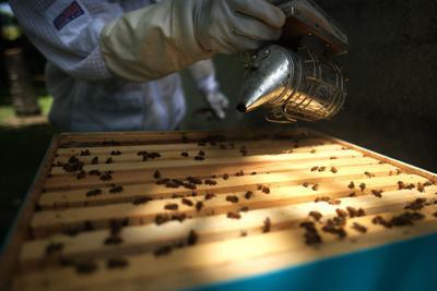 Guam's sweetest secret: locally grown Hafa Adai Honey