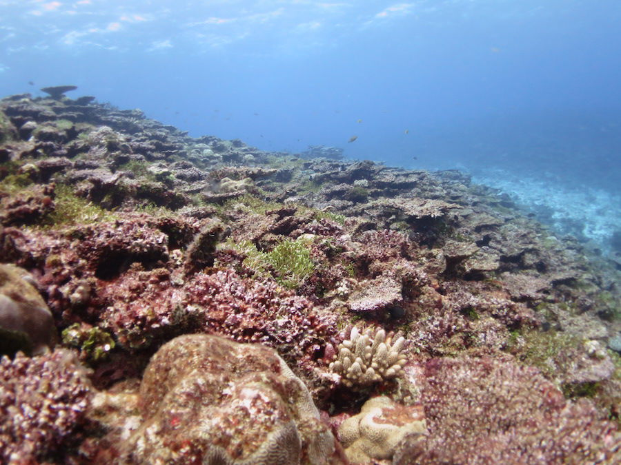 New study predicts coral bleaching, coral-eating starfish invasions