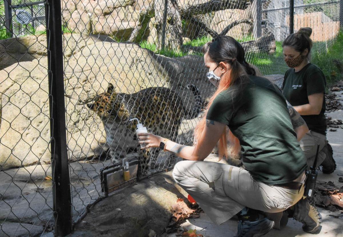 Maryland Zoo is one of 70 US facilities vaccinating wild animals against the coronavirus