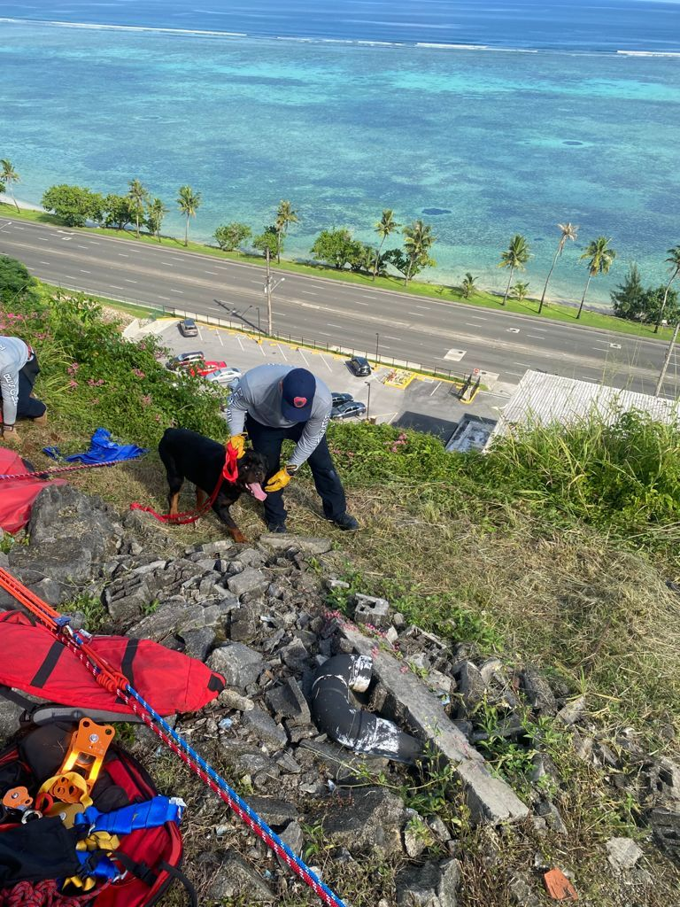 Family pet rescued after 40-foot cliff fall