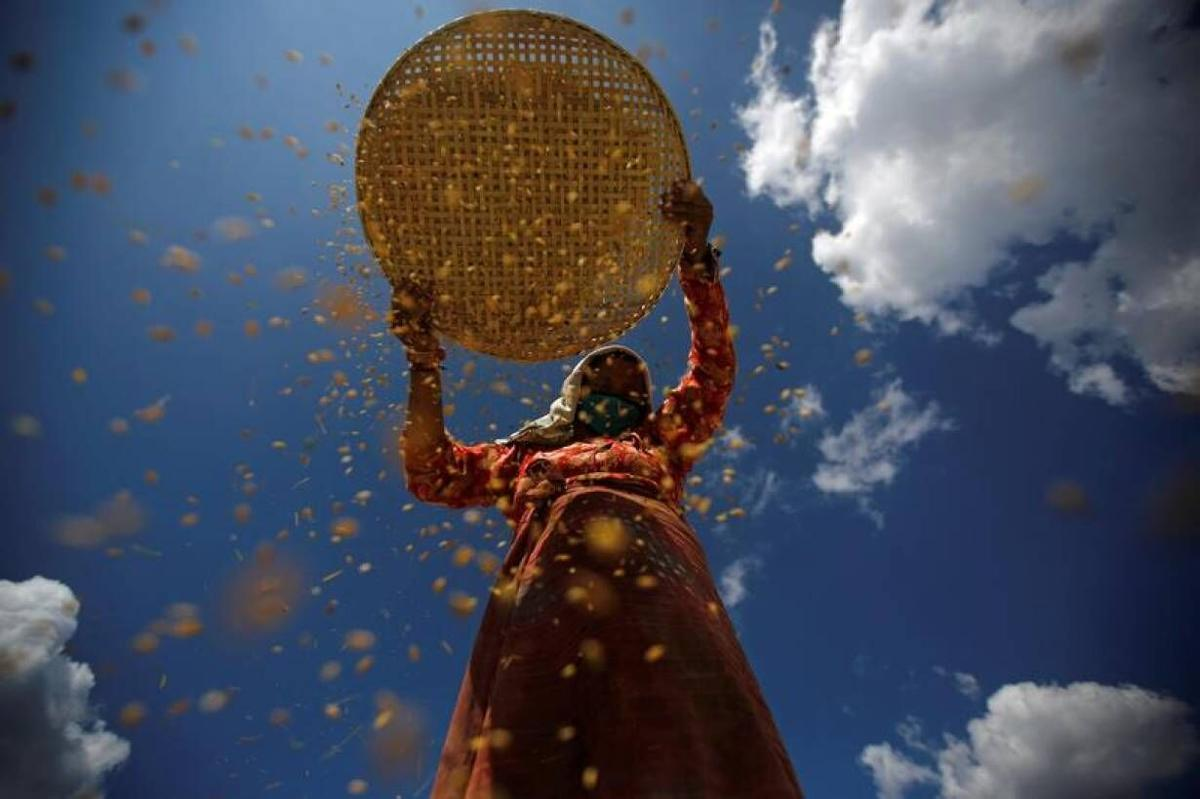UN summit seeks to shape a food system fit for the future