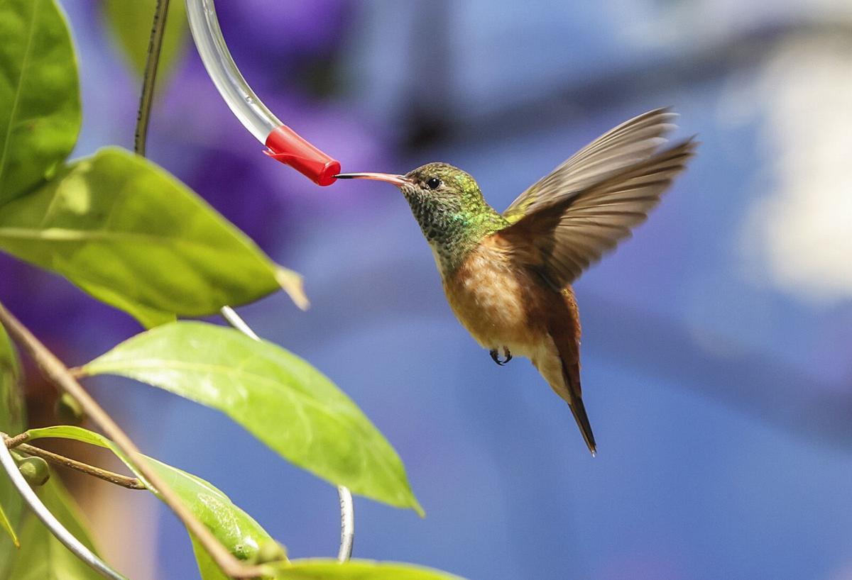 San Diego Zoo debuts new hummingbird and Komodo dragon exhibits